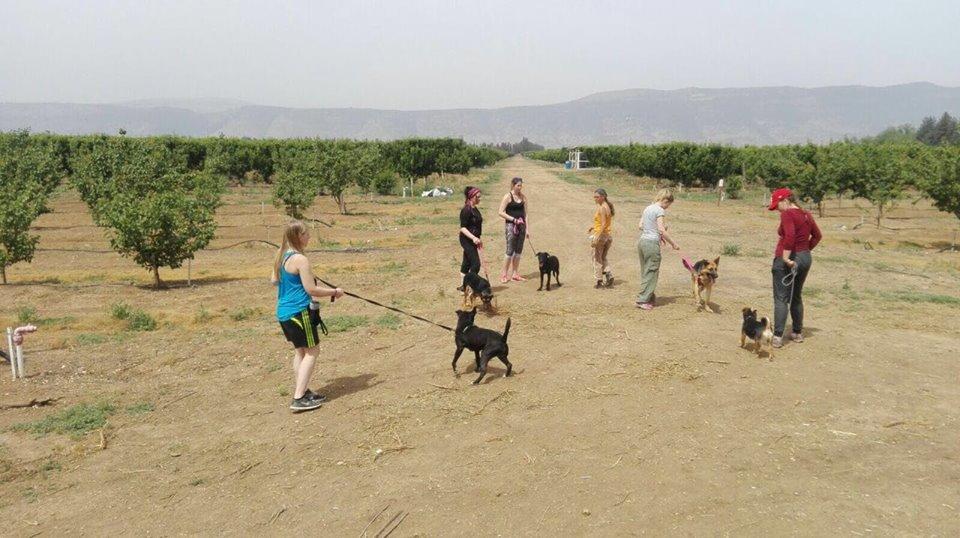 מדהים כלביית הבשן | כלביה בגליל העליון - בגליל העליון והסביבה FV-53