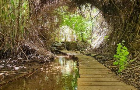 עמק הנהר הנעלם | נחל קורן קיבוץ הגושרים