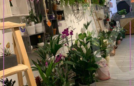 בלום חנות פרחים בראש פינה