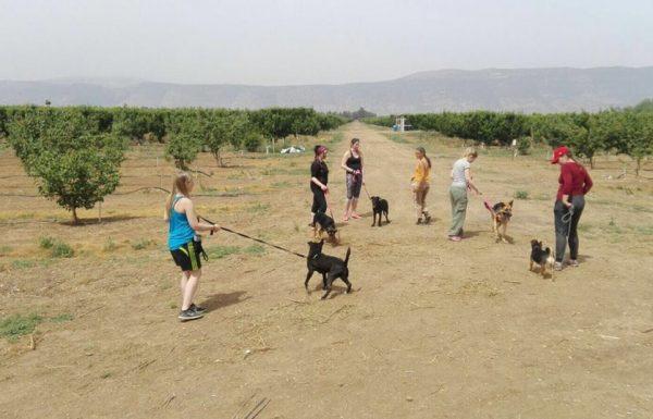 כלביית הבשן   כלביה בגליל העליון